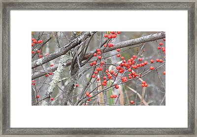 Red Berry Branch Framed Print