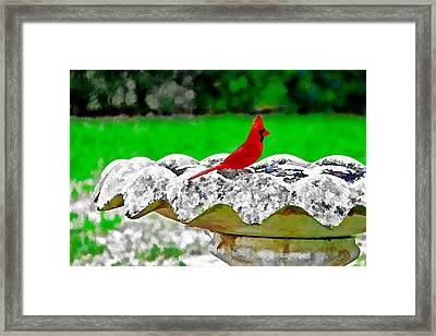 Red Bird In Bath Framed Print
