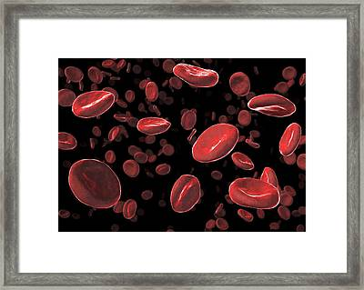 Red Blood Cells, Artwork Framed Print