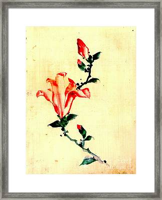 Red Blossom With Buds 1840 Framed Print by Padre Art