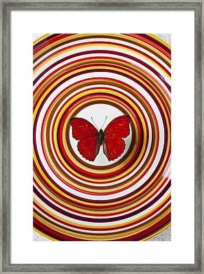 Red Butterfly On Plate With Many Circles Framed Print by Garry Gay