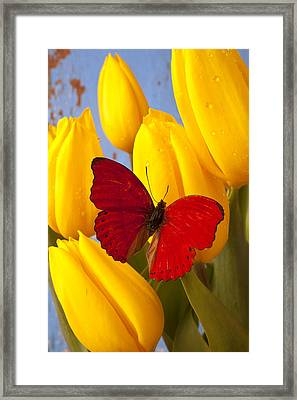 Red Butterful On Yellow Tulips Framed Print by Garry Gay