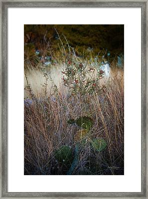 Red Button Cactus And Friends   1860 Framed Print by Fritz Ozuna