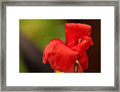 Red Canna Lilly Framed Print by Gene Sherrill