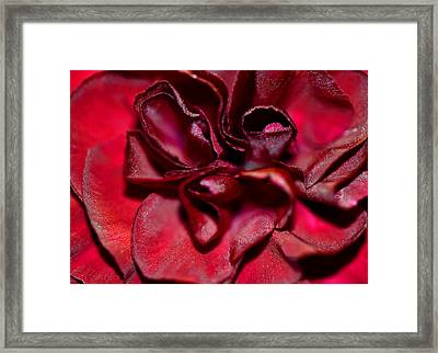Red Carnation With Heart Framed Print by Sandi OReilly
