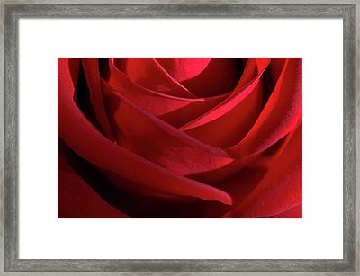 Red Framed Print by Carolyn Dalessandro