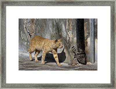 Framed Print featuring the photograph Red Cat In Burano by Raffaella Lunelli