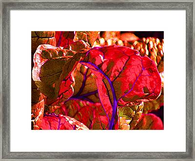 Red Chard Framed Print by Rory Sagner