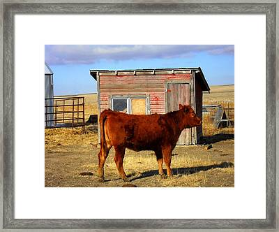 Framed Print featuring the photograph RED by Clarice  Lakota