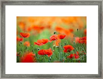 Red Corn Poppy Flowers 03 Framed Print by Nailia Schwarz