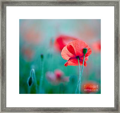 Red Corn Poppy Flowers 04 Framed Print