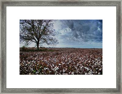 Red Cotton And The Tree Framed Print