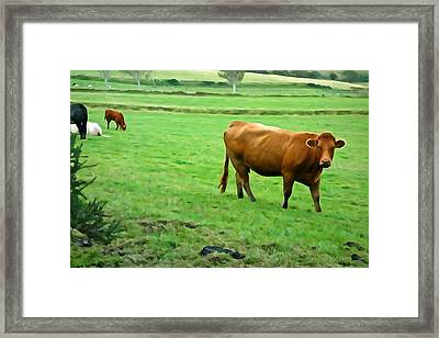 Framed Print featuring the photograph Red Cow by Charlie and Norma Brock
