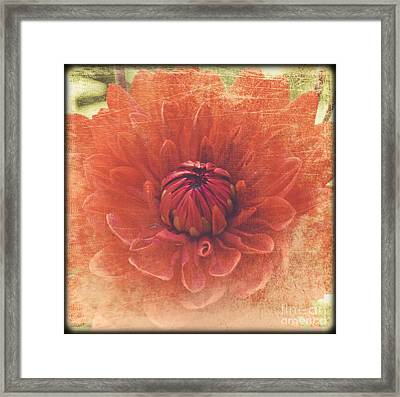 Framed Print featuring the photograph Red Dahlia by Alana Ranney