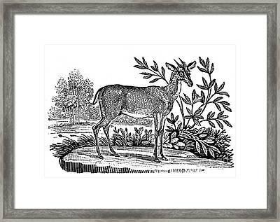 Red Deer Framed Print by Granger