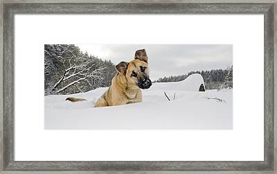 Red Dog Sits In A Snowdrift Framed Print