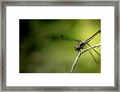 Red Dragon 2 Framed Print