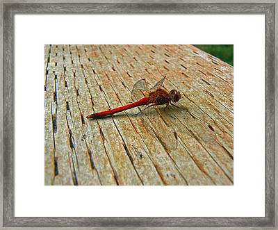 Red Dragonfly Framed Print by Pamela Patch