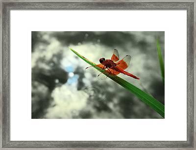 Red Dragonfly Framed Print by Viktor Savchenko