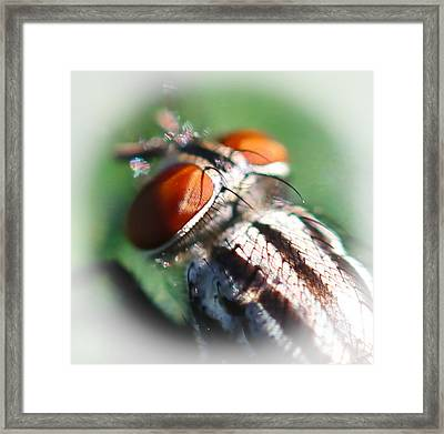 Red-eye Flight Framed Print by Maureen  McDonald