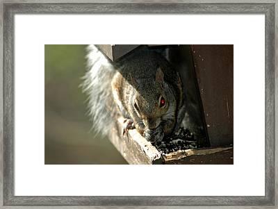 Red Eyed Demon Squirrel Framed Print