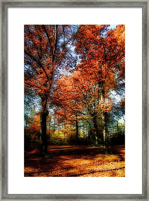 Red Fall Framed Print by Hannes Cmarits