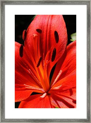 Red Flame Framed Print by Bruce Bley
