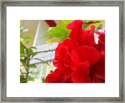 Red Flower Framed Print by Chetan Ranjan