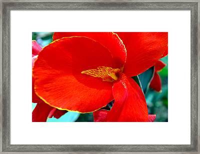 Red Flower Framed Print by Denis Shah
