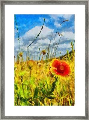 Red Flower In The Field Framed Print by Jeff Kolker