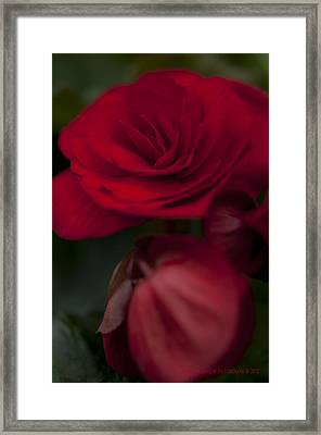 Red Flower Framed Print by Kelvin Andow