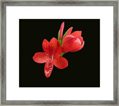 Framed Print featuring the photograph Red Flower by Lynn Bolt