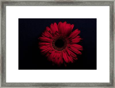 Red Flower Framed Print by Ron Smith