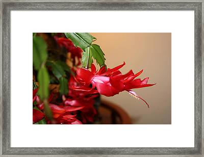 Red Flower Seduction Framed Print by James Collier