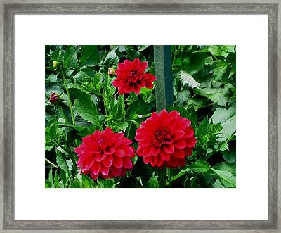 Red Flowers Framed Print by Kathy Long