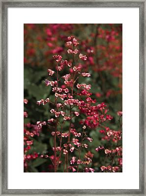 Red Flowers Framed Print by Svetlana Sewell
