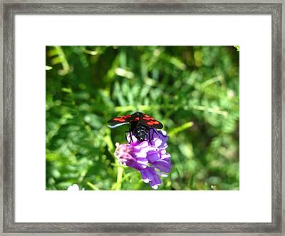 Red Fly Framed Print by Andonis Katanos