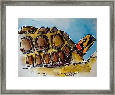 Red Foot Tortoise Framed Print by Richard Greene