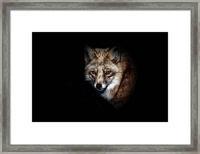 Red Fox Framed Print by Karol Livote