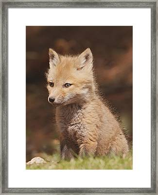 Red Fox Kitt Framed Print