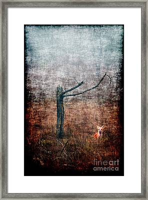Framed Print featuring the photograph Red Fox Under Tree by Dan Friend