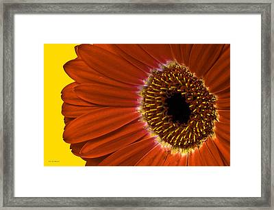 Red Gerber Daisy Framed Print by Bob Mulligan