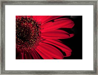 Red Gerbera Framed Print
