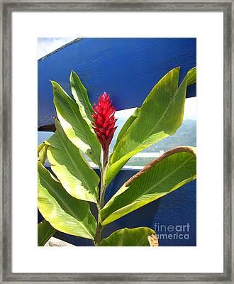 Red Ginger Framed Print by Randi Shenkman