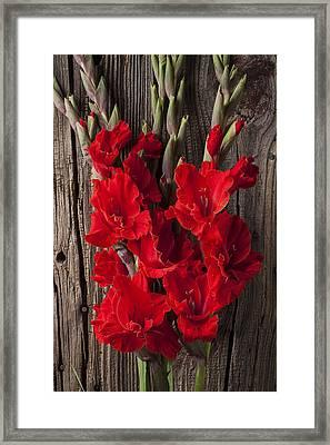 Red Gladiolus Framed Print by Garry Gay