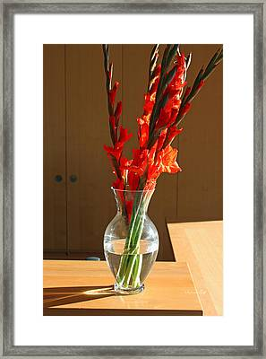 Red Glads Framed Print by Suzanne Gaff