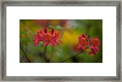 Red Groups Framed Print by Mike Reid