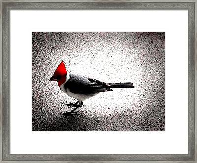 Red Head Framed Print by Ken Riddle