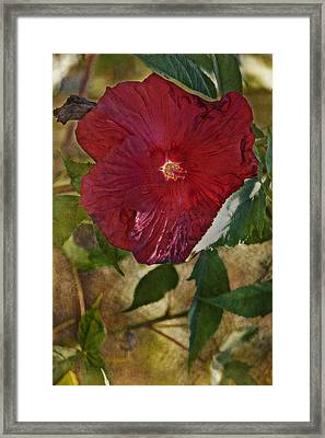 Red Hibiscus Framed Print by Bonnie Bruno