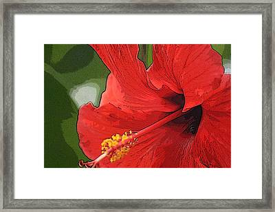 Red Hibiscus Framed Print by Donna  Smith